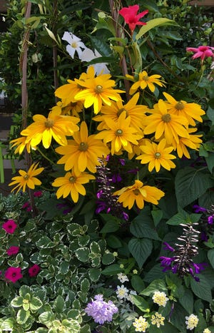The large container with Prairie Sun rudbeckia welcomes visitors at an upscale lifestyle center in Columbus, Ga.
