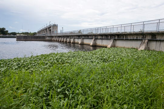 On August 14, 2019, the water at Franklin Locks on the north side of the Caloosahatchee River was free of algae.