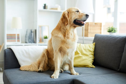 Keeping a stylish home that is also safe and comfortable for four-legged family members is possible with a little planning.
