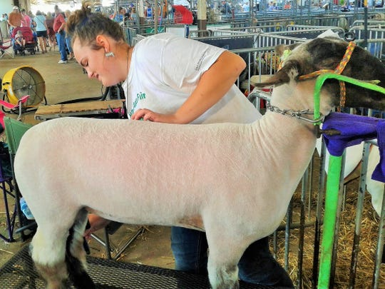 "Ella Isaacs, 14, of Iowa City brushes her speckle-faced lamb in the sheep barn of the Iowa State Fair in Des Moines Tuesday. ""It's a lot of work, but I love it,"" she said."