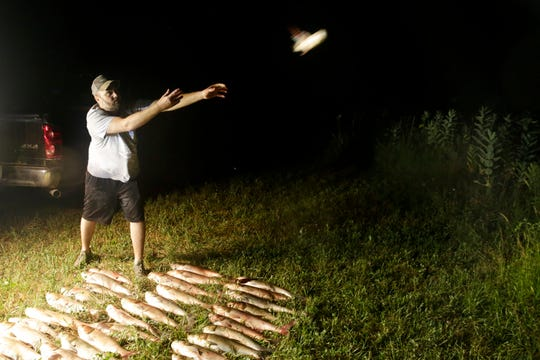 Shain Loveland throws the 43 Asian carp caught from a bow fishing trip on the Tippecanoe  river into a sunflower field behind his home to fertilize the land, Wednesday, Aug. 14, 2019.