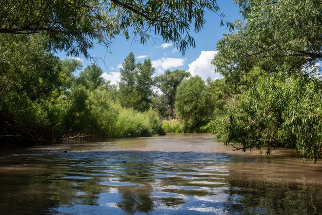 The Verde River is lined with trees in Camp Verde.