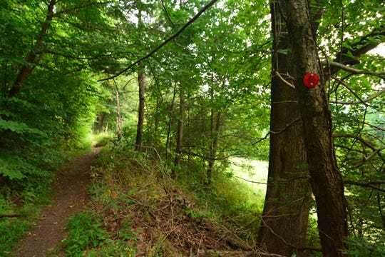 The first section of the trail along Sugarloaf Hill.