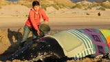 A decision was made to euthanize the 20-foot-long whale Thursday after it was unable to return to the ocean during two high tides.