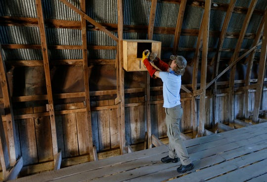 Rhonda Rimer, a natural history biologist with the Missouri Department of Conservation, places a barn owl into an owl box in the hayloft of a barn on Thursday, Aug. 15, 2019.