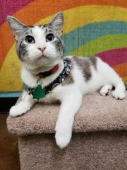 Lenix is available for adoption at C.A.R.E. Rescue.