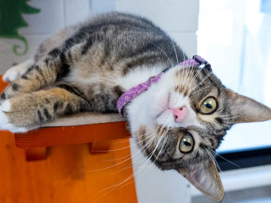 Beego is waiting for adoption at the Agoura Hills Animal Care Center.