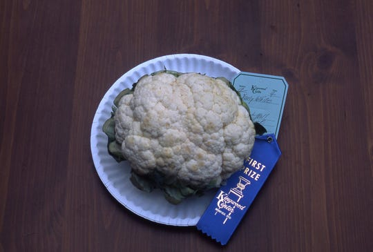 This cauliflower was awarded a blue ribbon because it is pure white; has attached, protective leaves trimmed; firm curd at least 4 inches in diameter; and head is free of damage.
