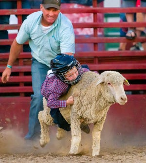 Kids try to hang on to their sheep during the mutton busting competition.