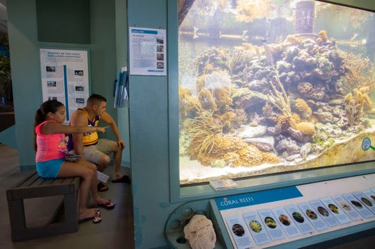 """It's beautiful how much life it has,"" said Stephanie Valiente, 11, of Kendall, of the Smithsonian Marine Ecosystem Exhibit's 2,500 gallon coral reef display she observes with her father, Alberto Valiente, on Friday, Aug. 16, 2019, at the St. Lucie County Aquarium in Fort Pierce. The Valientes speak Spanish and had the option to use a binder with a Spanish translation of the information panels at the aquarium. ""My dad is the only one that needs it, but I can just translate for him,"" Stephanie Valiente said. ""It's really nice they offer that."""
