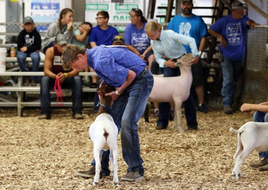 Chris Tooms shows a goat while Kamryn Kreis shows a lamb behind him during the Showman of Showmen competition at the Muskingum County Fair on Friday morning. Tooms and Kreis finished tied for second.