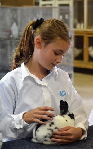 Leah Jahnke of Little River 4-H Club holds her rabbit while waiting to be judged at the 2019 Oconto County Fair.