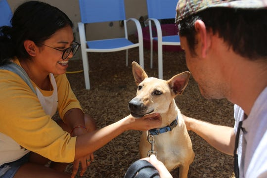 Ashley Hernandez and Elias Texel, both of Yucca Valley, meet Torri during the Clear The Shelters pet adoption event at the Palm Springs Animal Shelter in Palm Springs, Calif., on Saturday, August 17, 2019.