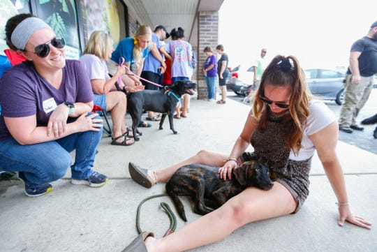 Wyatt, a Plott Hound mix available for adoption through Rescue One, cuddles up to Hannah Sawyer outside Petsway on Battlefield Road during Clear the Shelters day on Saturday, Aug. 17, 2019.