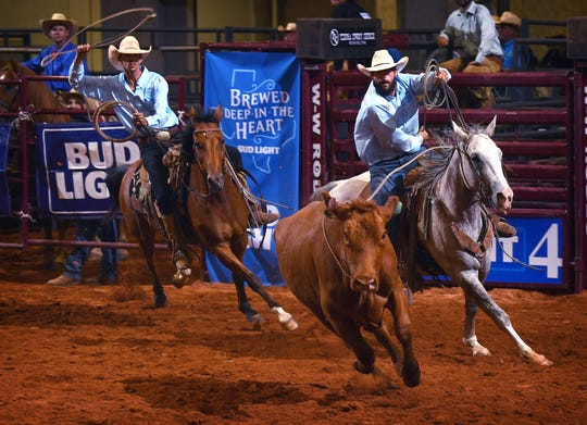 Cowboys from the Spade Ranch rope a cow during the wild cow milking contest during Friday night's 39th Annual Texas Ranch Roundup at the Kay Yeager Coliseum.