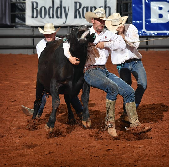 Cowboys with the Pitchfork Ranch compete in the wild cow milking contest at the 39th Annual Texas Ranch Roundup at the Kay Yeager Coliseum Friday night.