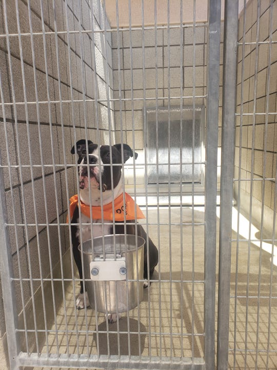 One animal that hadn't found a home is Oreo, a black and white terrier mix who has lived at the shelter for 1,080 days and stands as the dog living there the longest.