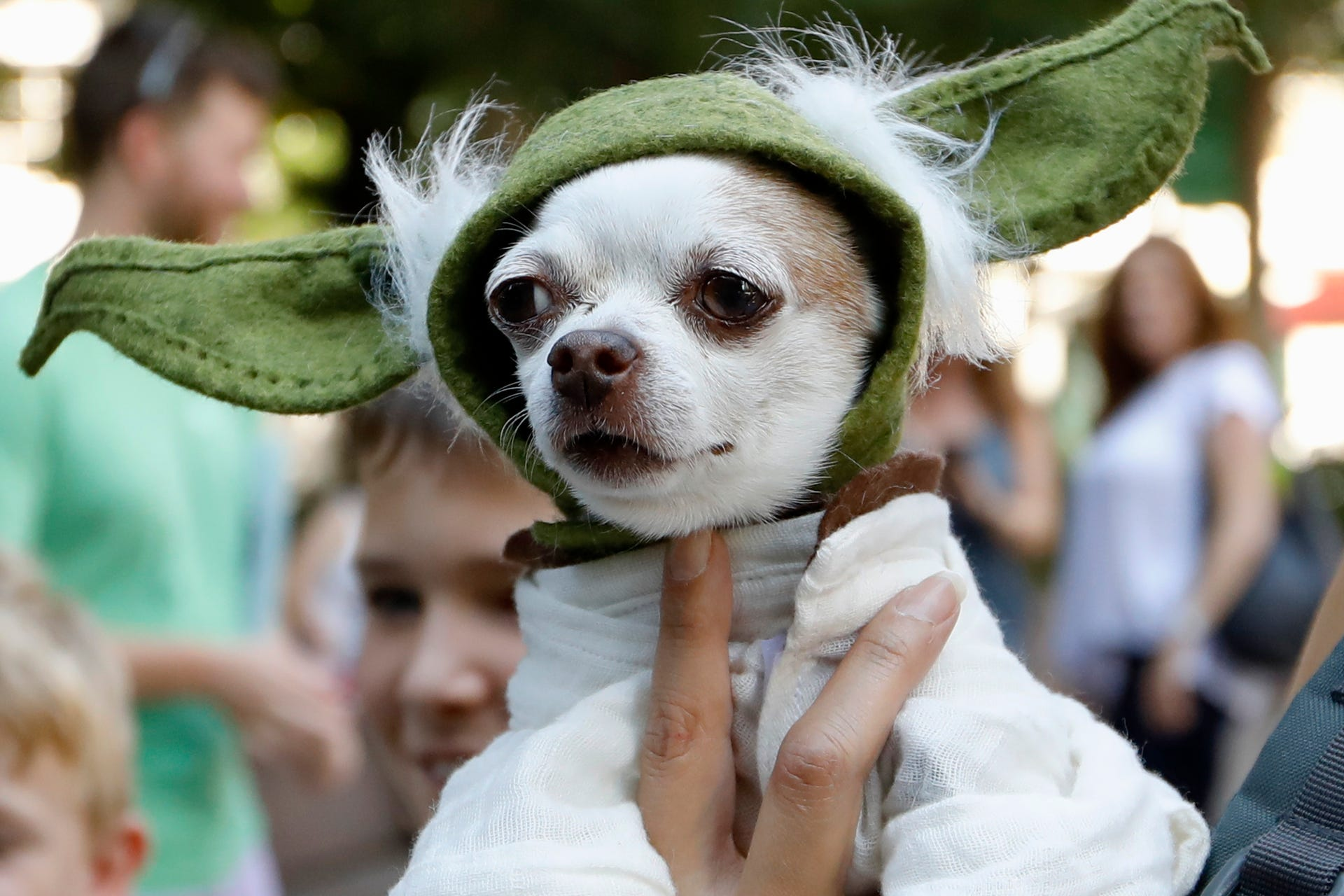 "A dog dressed as Yoda from ""Star Wars"" won the cosplay costume contest award at Doggy Con in Woodruff Park, Saturday, Aug. 17, 2019, in Atlanta. Cosplay is the practice of dressing up like a fictional character."