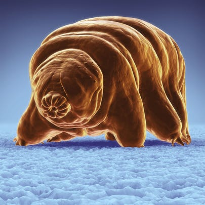 """Computer generated image of a tardigrade or """"water bear"""""""