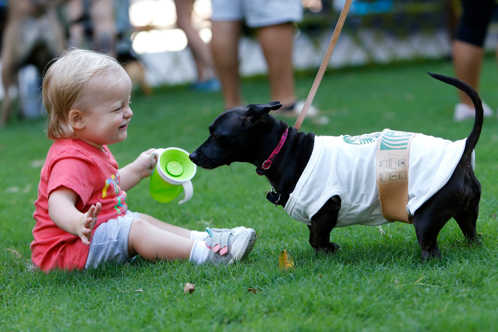 "Stella Jones, a 17-month old Atlanta resident, plays with Kira, a dog dressed as a Starbucks coffee cup, at Doggy Con in Woodruff Park, Saturday, Aug. 17, 2019, in Atlanta. Kira's owner Tali Higgins dressed like a Starbucks barista. ""I like coffee and my dogs are super sweet, so I thought it was a good fit,"" Higgins said."