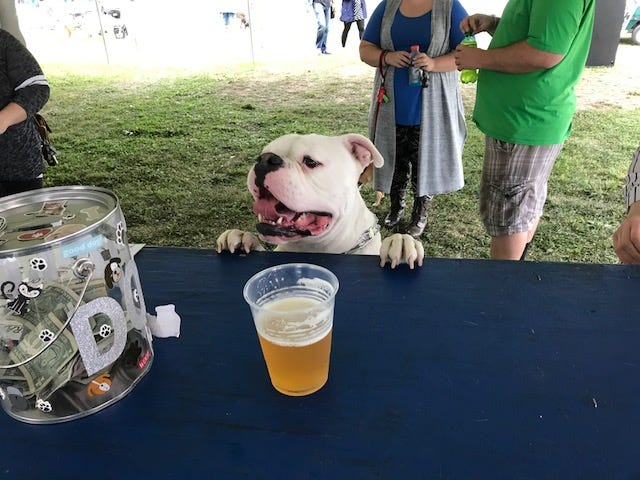 "I said, ""hey, bartender."" Bark 'N Brew combines man's best friend with Wisconsin's favorite drink."