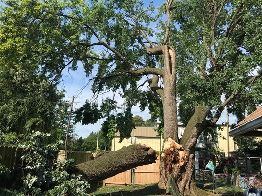 The bulk of the tree on South 9th Street remained standing after Sunday's storm.