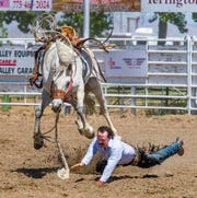A rider falls to the ground during the bronc riding competition.