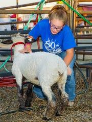 Raimie Freeman, of Fallon, washes her lamb, Daisy.