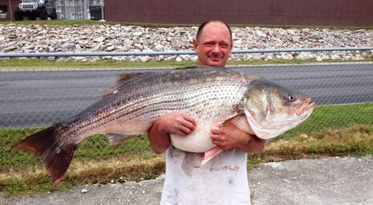Lawrence Dillman of Rockaway Beach caught this 65-pound, 2-ounce state-record striped bass at Bull Shoals Lake, downstream from Table Rock Lake, in 2015.