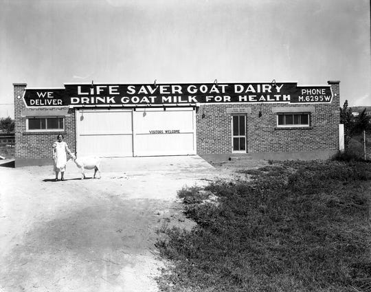 "Good health was reflected in the name of this milk-selling organization, the ""Life Saver Goat Dairy."""
