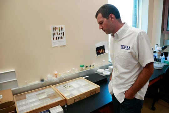 In this Wednesday, July 31, 2019, photo, Brian Bahder, assistant professor of entomology at the University of Florida, shows off cases of captured plant-hopper insects, that are thought to transmit a lethal bronzing disease to palm trees, at a lab in Davie, Fla.