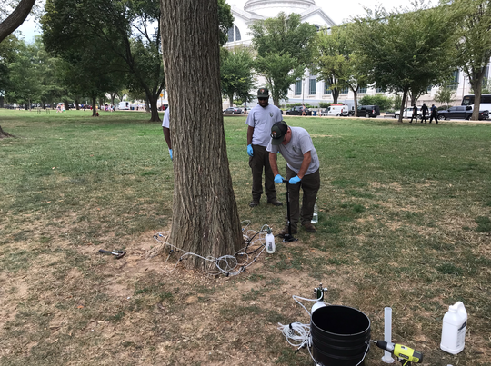 National Park Service members treat a tree infected by Dutch elm disease.