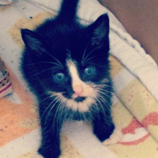 Edison kitten rescued from storm drain