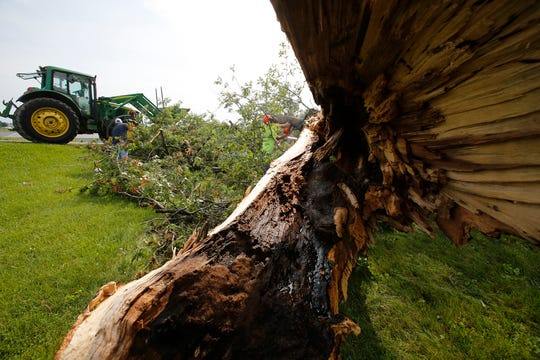 The remnants of a tree are removed following storm damage at Jared Neer's home on the western edge of Lacona, Iowa. An early morning storm Tuesday  damaged buildings and trees in and around Lacona.