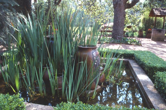Cattails can be well-established in a water garden as an alternative fresh food source.