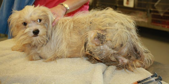 Dogs were rescued from an Adams County home with deplorable living conditions.