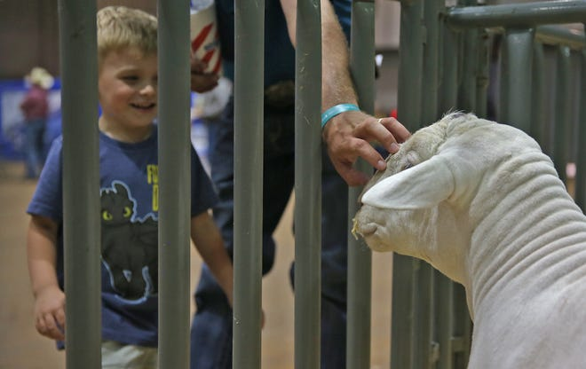 Mason Smartt, far left, smiles at a sheep during the Texas Sheep and Goat Expo at the First Community Spur Arena on Friday, August 16, 2019.