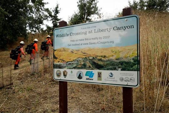 In this July 25, 2019, photo, a fire crew walks past a sign at a proposed site for a wildlife crossing in Agoura Hills, Calif. Hoping to fend off the extinction of mountain lions and other species that require room to roam, transportation officials and conservationists will build a mostly privately funded wildlife crossing over a freeway. It will give big cats, coyotes, deer, lizards, snakes and other creatures a safe route to open space and better access to food and potential mates. (AP Photo/Marcio Jose Sanchez)