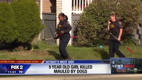 9-year-old girl fatally mauled by 3 dogs in Detroit; pet owner arrested