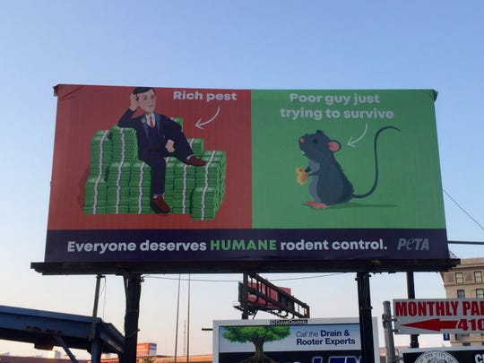 "A billboard in Baltimore posted by the controversial animal rights group People for the Ethical Treatment of Animals shows a cartoon version of Jared Kushner next to a rat, calling Kushner a ""rich pest."""