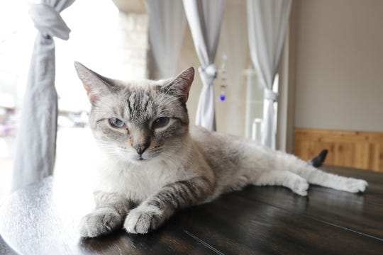 Cats at the new Pawffee Shop Cat Cafe will be available for adoption.