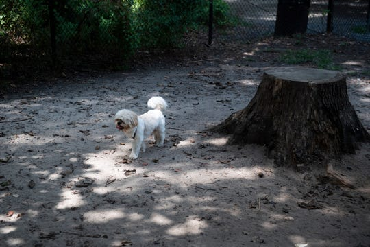 Koko the dog inside the Timber Creek Dog Park Tuesday, Aug. 20, 2019 in Blackwood, N.J.