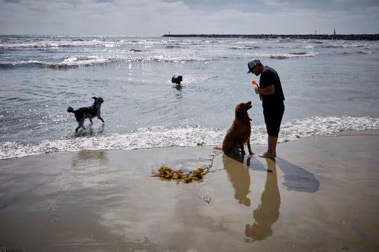 FILE- In this May 29, 2019, file photo a man talks to his dog before throwing a tennis ball along the dog beach at Ocean Beach in San Diego. Elanco Animal Health will spend $7.6 billion to acquire Bayer AG's veterinary medicines business to become the second-largest animal health company. Elanco said Tuesday that it will pay $5.3 billion, or about 70% of the total price, in cash and the rest in stock.