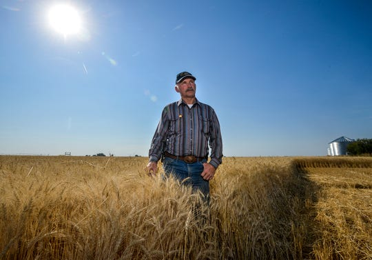 Wheat farmer Mitch Konen prepares for a harvest near Fairfield, Mont.