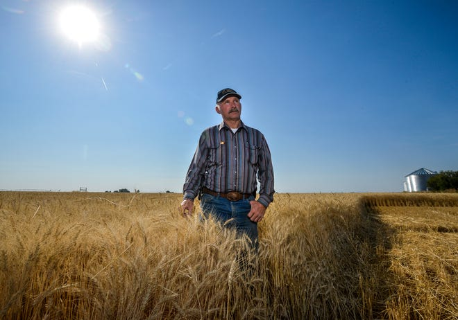 "Mitch Konen was eager earlier this week to begin harvest of his winter wheat crop north of Fairfield but it had a bit too much moisture for his liking. ""We'd usually be right in the middle of harvest right now,"" said Konen, noting harvest is two to three weeks late this year."