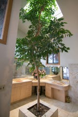 A signature of architect Bill Weaver is to incorporate a tree inside his homes. In Harold Cole's home, shown Wednesday, Aug. 21, 2019, a tree grows in the bathroom up to a skylight, and needs to be trimmed periodically.