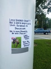 """Chase, a 5-year-old boy from Denham Springs, Louisiana, posted flyers for his missing hermit crab named """"Pensacola"""" at the beginning of August throughout his family's neighborhood."""