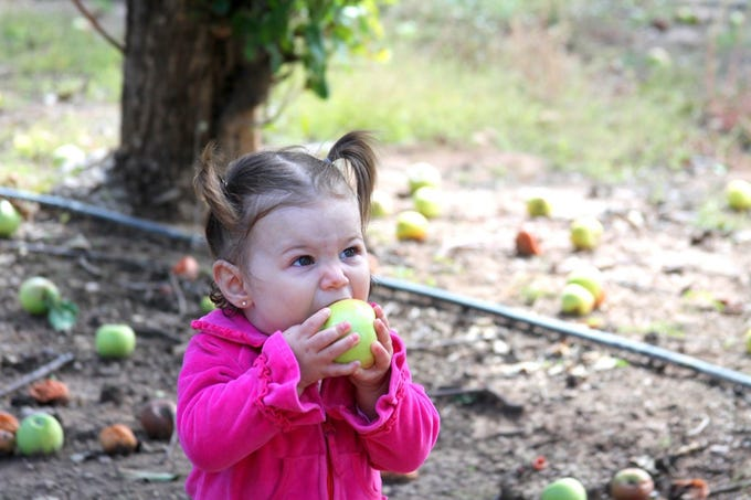 A young fruit picker takes a well-earned break during the Apple Harvest Celebration at Apple Annie's in Willcox.