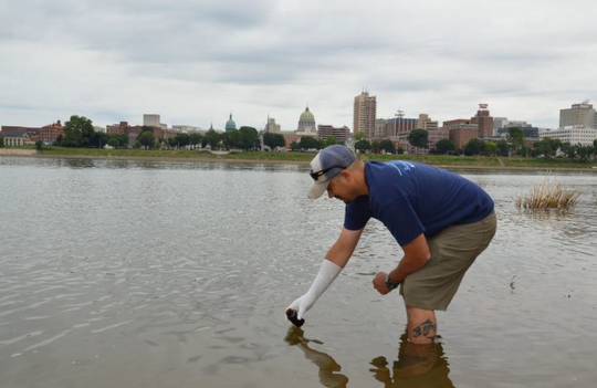 Lower Susquehanna Riverkeeper Ted Evgeniadis taking a water sample at City Island Park beach in Harrisburg. Sampling found levels of fecal bacteria several times higher than would be safe for water contact.