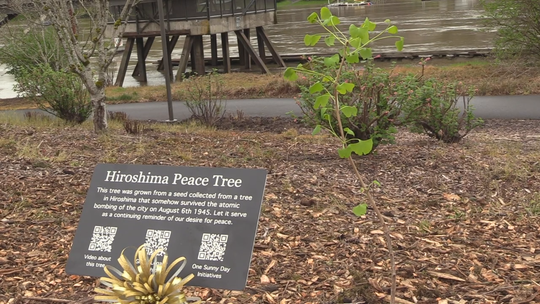 One of the Hiroshima Peace Trees was planted in Lake Oswego.